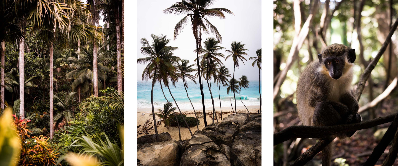 découvrir la barbade - antilles, jardin tropical - plages paradisiaques