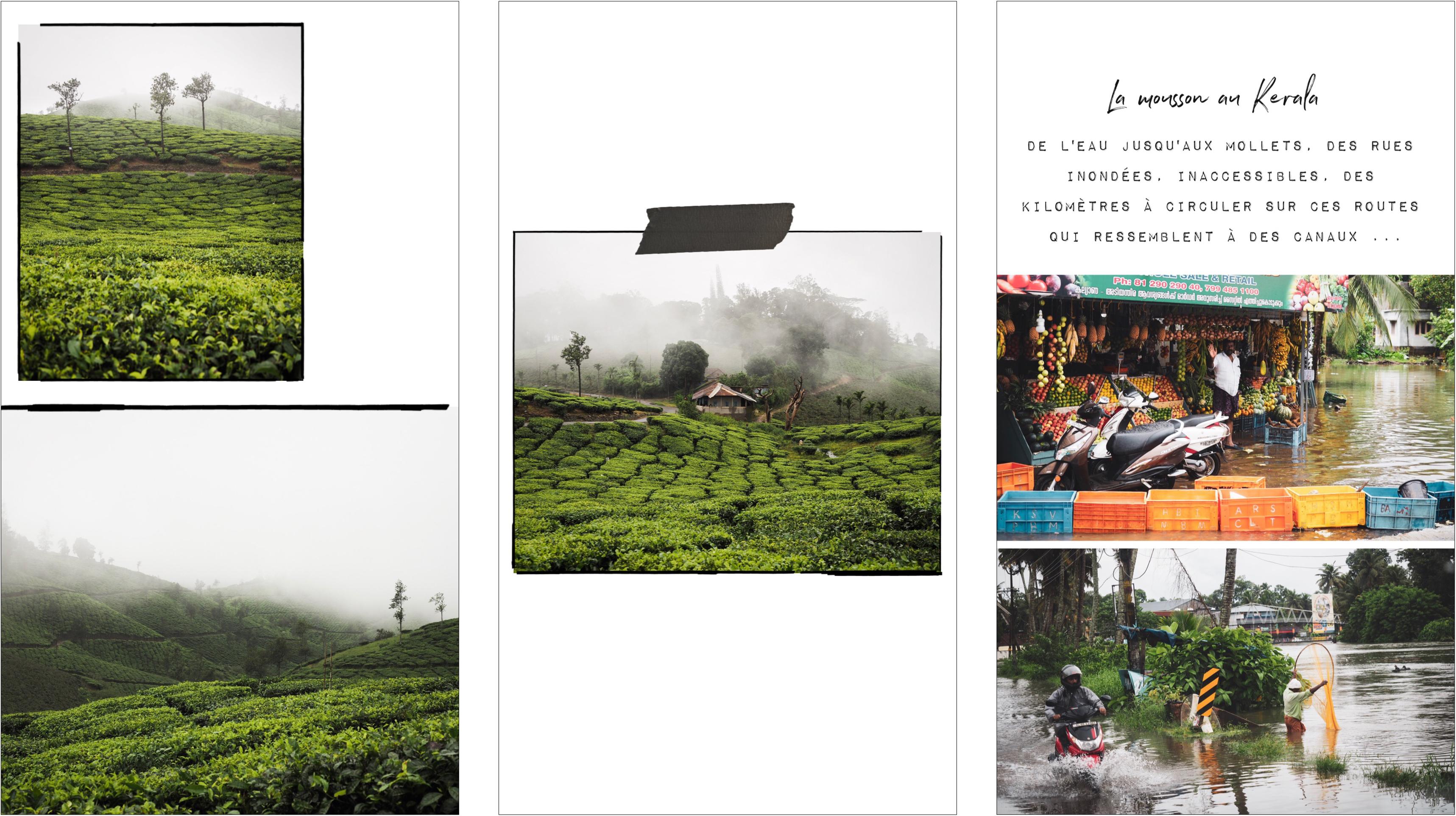 voyager au kerala - photos d'Inde - culture du Kerala - découvrir les plantations de thé en Inde
