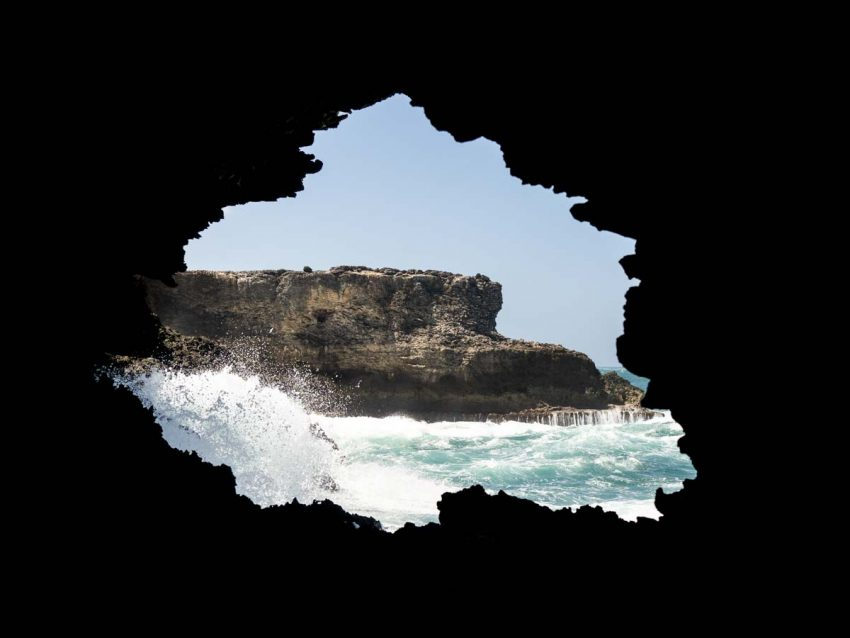 découvrir la barbade - grottes - animal flore cave