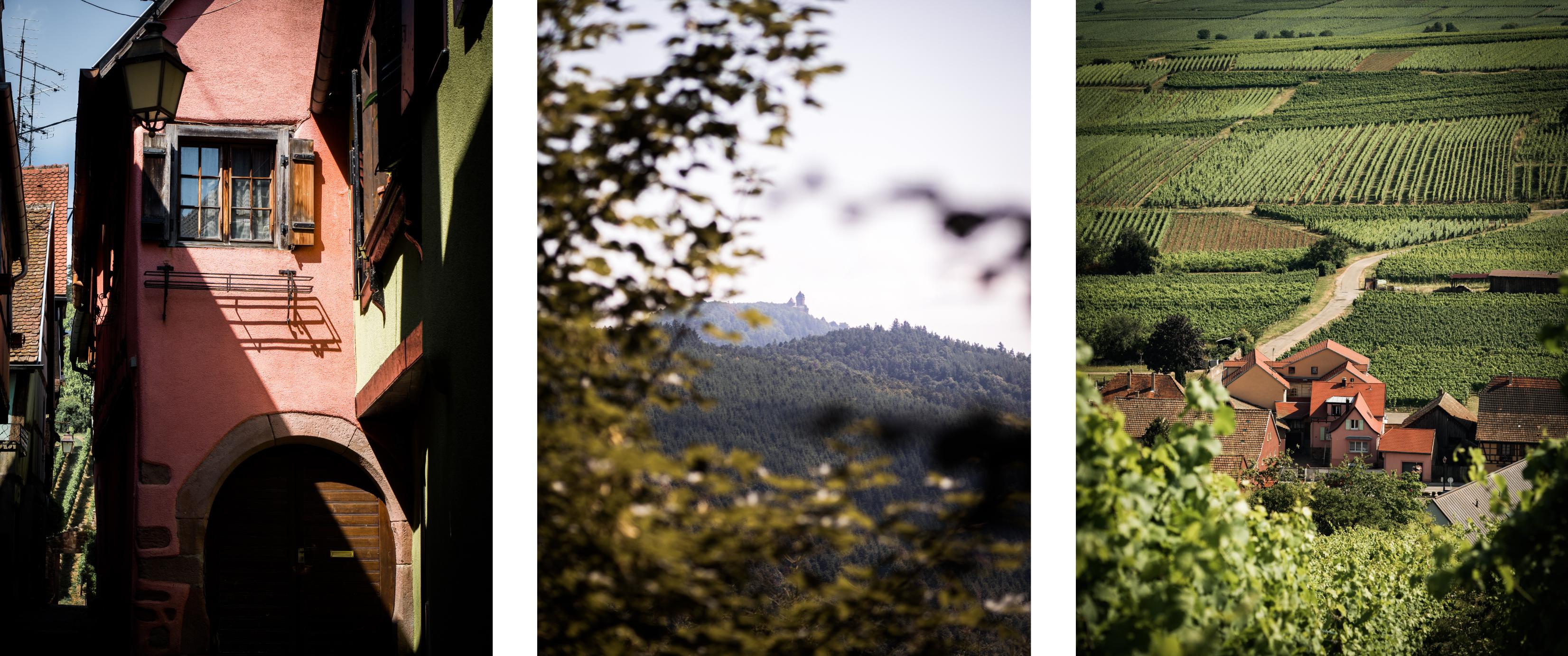 cabane dans les arbres en Alsace - pays de Ribauvillé et Riquewhir - que voir en Alsace